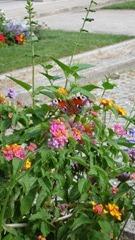 Una farfalla al cimitero di Montmartre